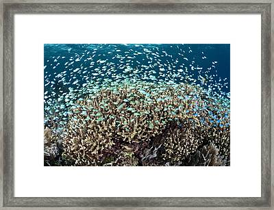 Reef Fish And Coral Framed Print