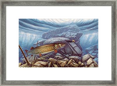 Reef King Musky Framed Print