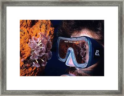 Reef Reflections Framed Print