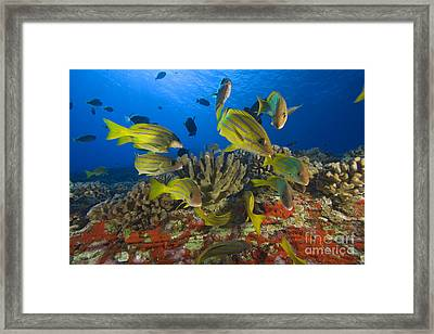 Reef Scene Framed Print by Dave Fleetham - Printscapes