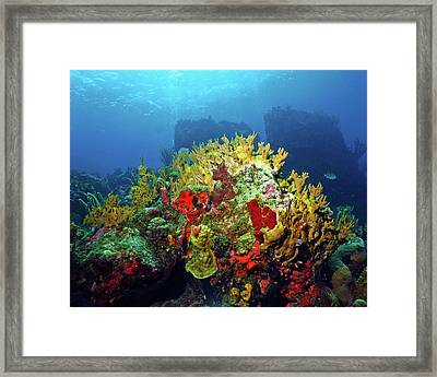 Reef Scene With Divers Bubbles Framed Print