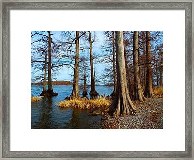 Reelfoot In Winter Framed Print by Julie Dant