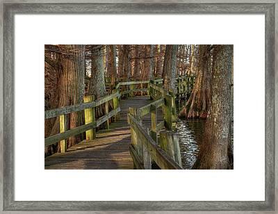 Reelfoot Lake 001 Framed Print