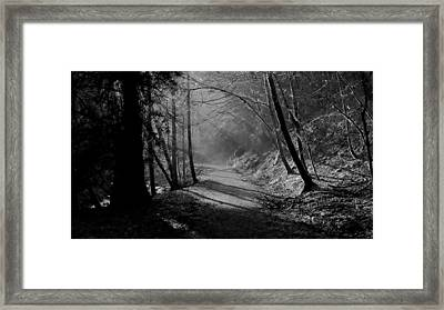 Reelig Forest Walk Framed Print