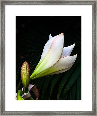 Refined Elegance Framed Print