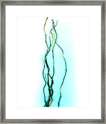Reflect Framed Print by Slade Roberts