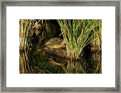 Reflect This Framed Print