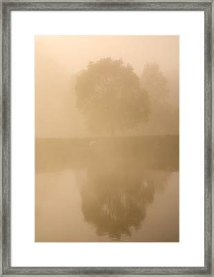 Reflected Gum Sunrise Framed Print by Mike  Dawson