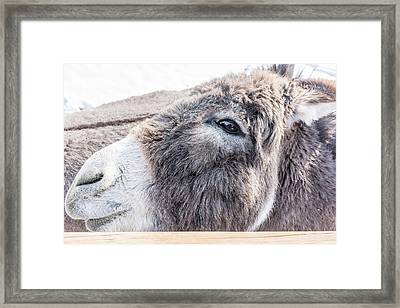 Reflected In His Eye Framed Print