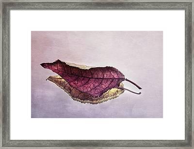 Reflected Leaf Framed Print by Angela Waite