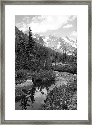 Reflected Pine Framed Print