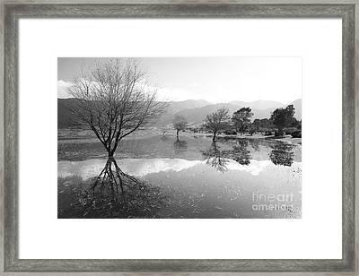 Reflected Trees Framed Print by Gaspar Avila