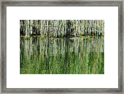 Reflecting Back Framed Print by Donna Blackhall