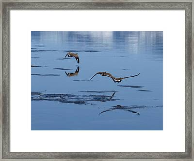 Reflecting Geese Framed Print