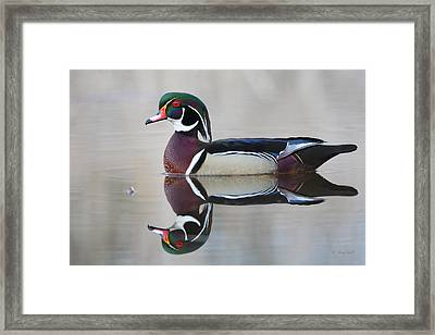 Framed Print featuring the photograph Reflecting by Gerry Sibell
