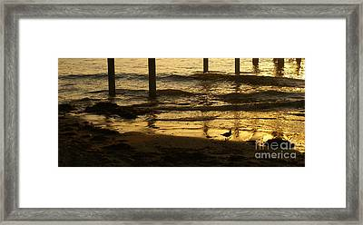 Reflecting Gold Framed Print