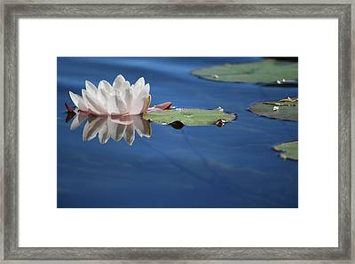 Framed Print featuring the photograph Reflecting In Blue Water by Amee Cave