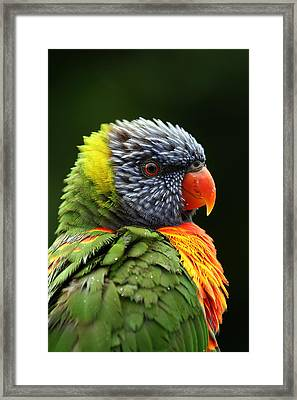 Reflecting In The Rain Framed Print