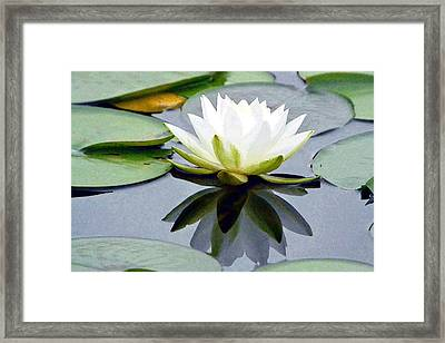 Reflecting Luminous Water Lily Framed Print
