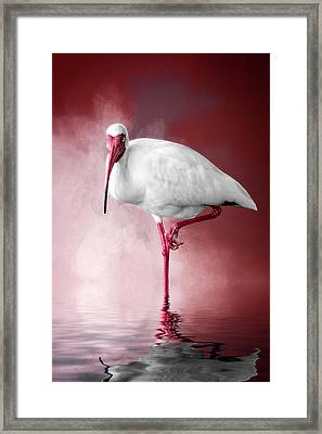 Reflecting On Life Framed Print