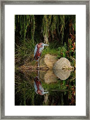 Reflecting On Lunch Framed Print