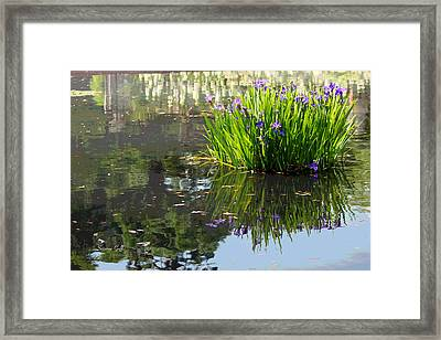 Reflecting Pond Framed Print by Suzanne Gaff