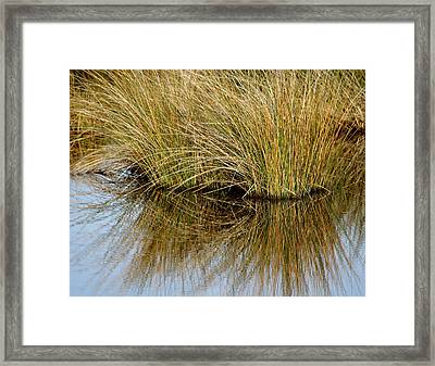Reflecting Reeds Framed Print by Marty Koch