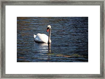 Reflecting Swan Framed Print