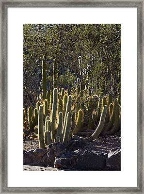 Framed Print featuring the photograph Reflecting The Sunshine by Phyllis Denton