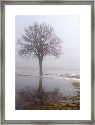 Reflecting Tree Framed Print