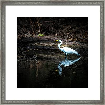 Reflecting White Framed Print by Marvin Spates