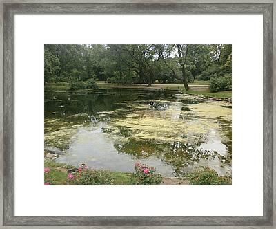 Reflection 1 Framed Print