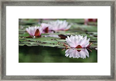 Framed Print featuring the photograph Reflection by Amee Cave