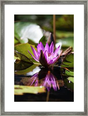 Framed Print featuring the photograph Reflection In Fuchsia by Suzanne Gaff