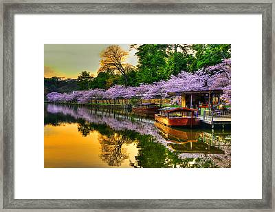 Reflection In Gold Framed Print