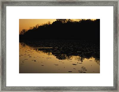 Reflection In The Water At Everglades Framed Print by Stacy Gold