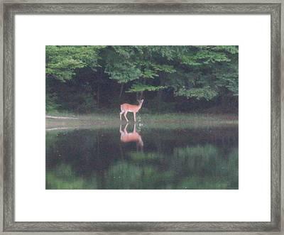Reflection Framed Print by Jeffrey Koss