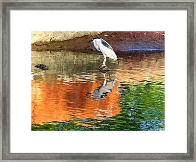 Reflection Of A Bird Framed Print by Kathy Tarochione
