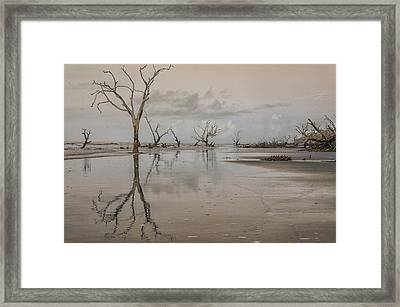 Reflection Of A Dead Tree Framed Print by Jim Cook