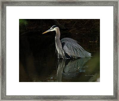 Reflection Of A Heron Framed Print