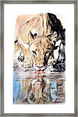Framed Print featuring the drawing Reflection Of A Lioness Drinking From A Watering Hole by Jim Fitzpatrick