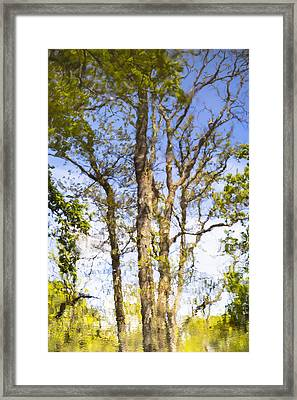 Reflection Of A Tree Framed Print by Joana Kruse