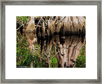 Reflection Of Cypress Knees Framed Print by Barbara Bowen