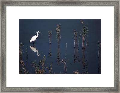 Reflection Of Little Egret In Lake Framed Print