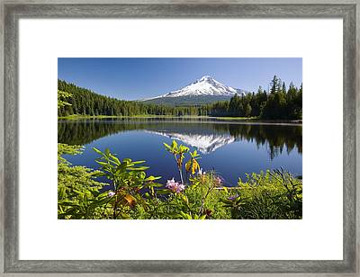 Reflection Of Mount Hood In Trillium Framed Print by Craig Tuttle
