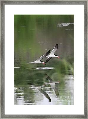 Reflection Of Skimmers Over The Pond Framed Print