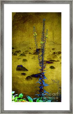Reflection Of Thoughts Framed Print
