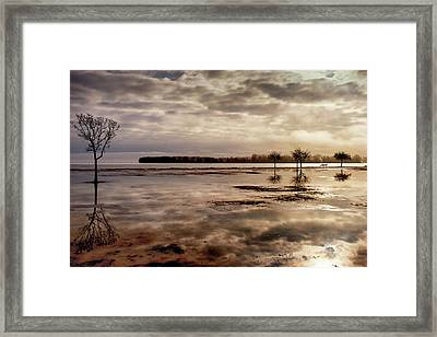 Reflection Of Trees In A Park Framed Print