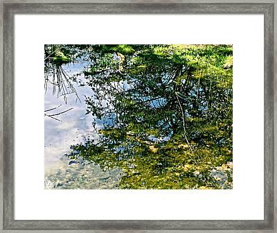 Reflection Pool Framed Print by Debra     Vatalaro