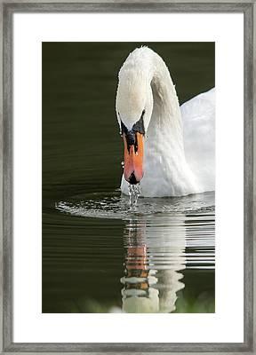 Reflection Portrait  Framed Print